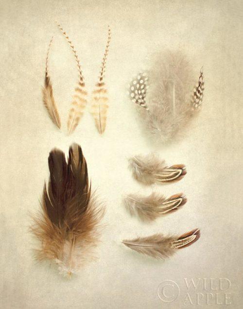 Feathers II by Elizabeth Urquhart