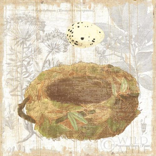 Botanical Nest I by Moira Hershey