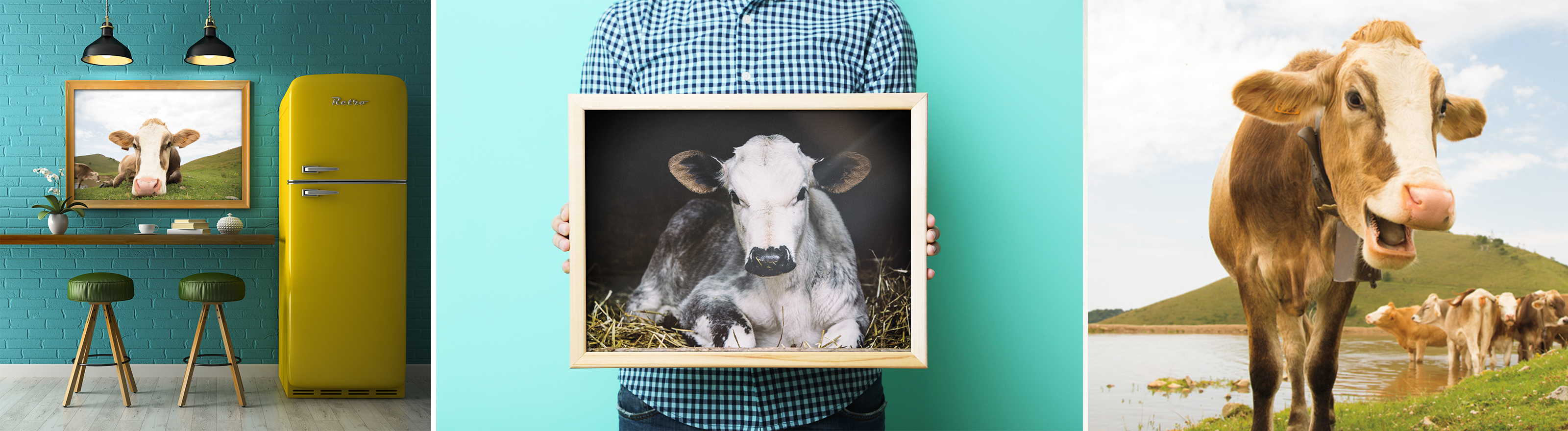 Cow Art for the Home